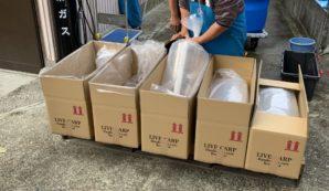 Selecteren van de beste Japanse koi